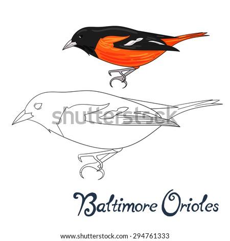 Educational game coloring book baltimore orioles bird  vector illustration - stock vector