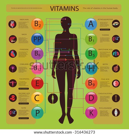 Effect of vitamins on the organs and systems of the human body. Visual scheme. - stock vector