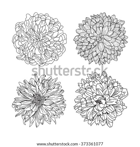 Elegant decorative chrysanthemum flowers set, design elements. Floral decoration for vintage wedding invitations, greeting cards, banners. - stock vector