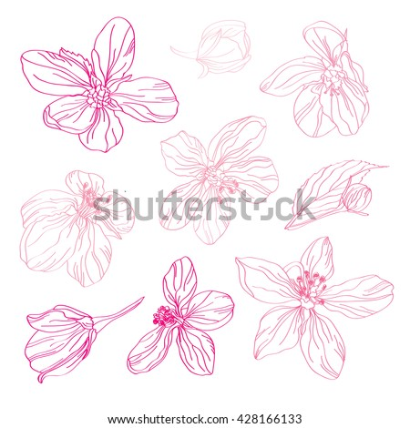 Elegant decorative pink cherry blossom flowers, design elements. Floral decorations for vintage wedding invitations, greeting cards, banners, floral backgrounds - stock vector