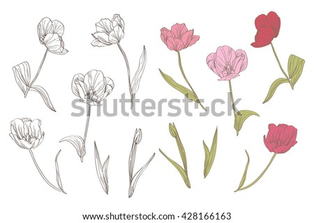 Elegant decorative tulip flowers, design elements. Floral branches. Floral decorations for vintage wedding invitations, greeting cards, banners, floral backgrounds - stock vector