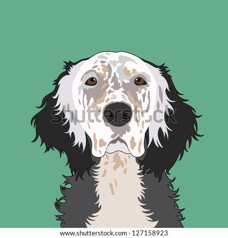 English setter, The buddy dog - stock vector