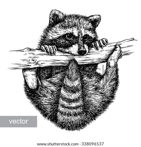 engrave raccoon illustration - stock vector