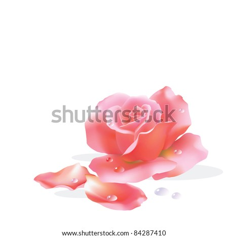 EPS10/ One pink rose - stock vector