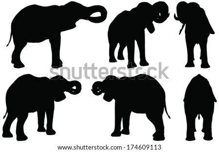 Eps 10 Set of editable vector silhouettes of African elephants in drink poses - stock vector