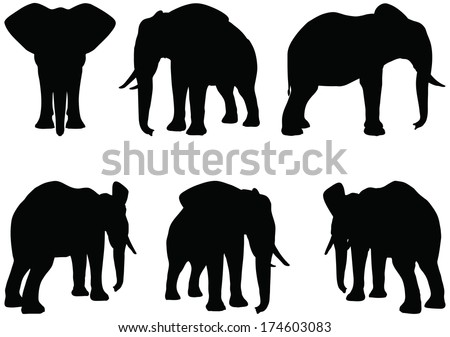 Eps 10 Set of editable vector silhouettes of African elephants in various poses - stock vector