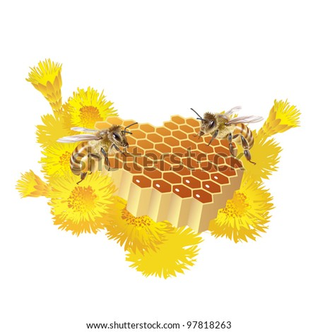 EPS 8/ Two bees and honeycomb heart-shaped [Anthophila] - stock vector