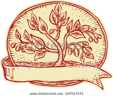 Etching engraving handmade style illustration of an olive tree set inside oval with ribbon on isolated background.  - stock vector