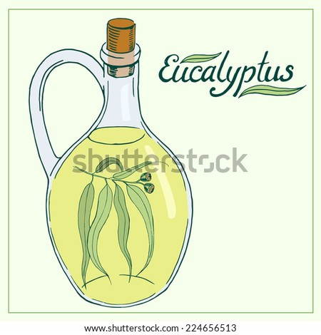 Eucalyptus leaves and branch with glass jar hand drawn vector illustration - stock vector