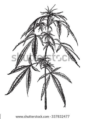 Europe hemp (female), vintage engraved illustration. Industrial encyclopedia E.-O. Lami - 1875. - stock vector