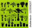 Exotic plant, bush, palm tree and cactus detailed illustration collection background vector - stock vector