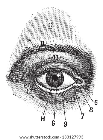 External View of the Human Eye, showing pupil, iris, sclera and eyelid, vintage engraved illustration. Dictionary of Words and Things - Larive and Fleury - 1895 - stock vector
