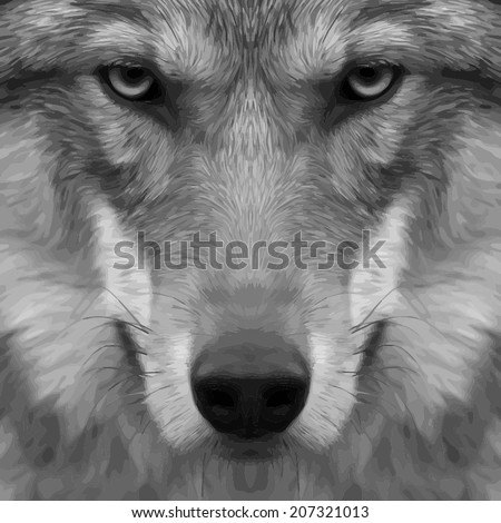 Eye contact with a severe wolf. Menacing expression and awful charm of the wolf, beautiful animal and dangerous beast. Amazing gray scaled vector image. Great for user pic, icon, label or tattoo.  - stock vector