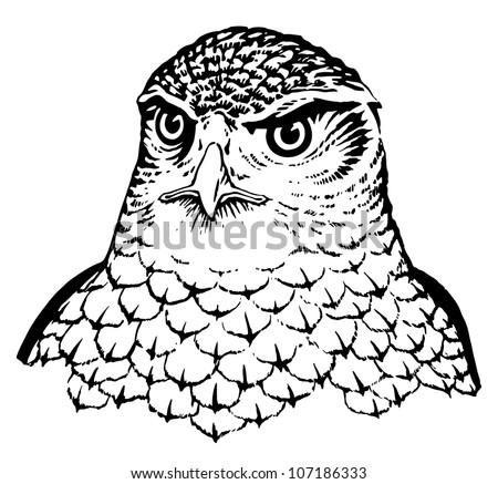 Falcon - stock vector
