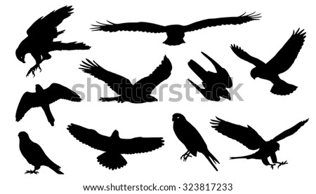 falcon silhouettes on the white background - stock vector