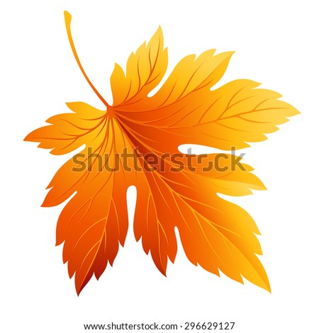 Fall leaf isolated in white. Vector illustration EPS 10 - stock vector