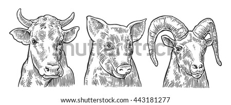 Farm animals icon set. Pig, cow and goat heads isolated on white background. Vector black vintage engraving illustration for menu, web and label. Hand drawn in a graphic style. - stock vector