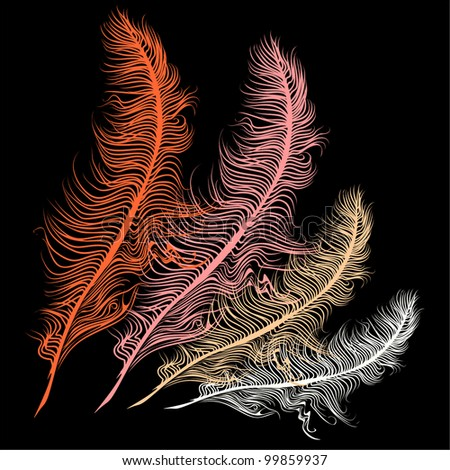 feather vector - stock vector