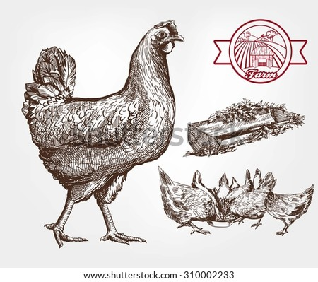 feeding chickens. set of sketches made by hand - stock vector