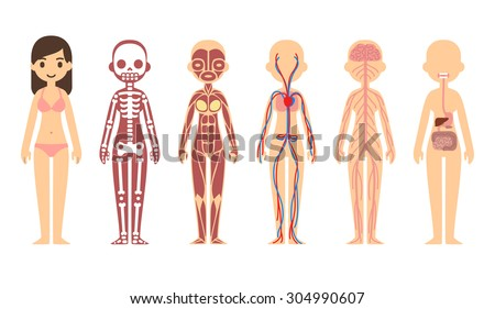 Female body anatomy chart: skeletal, muscular, circulatory, nervous and digestive systems. Flat cartoon style. - stock vector