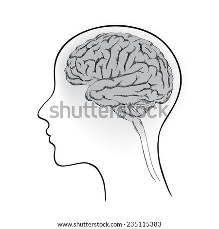 Female brain. Think icon concept. Vector sketch of human brain.  - stock vector