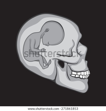 Fetus Inside of the Human Skull - stock vector