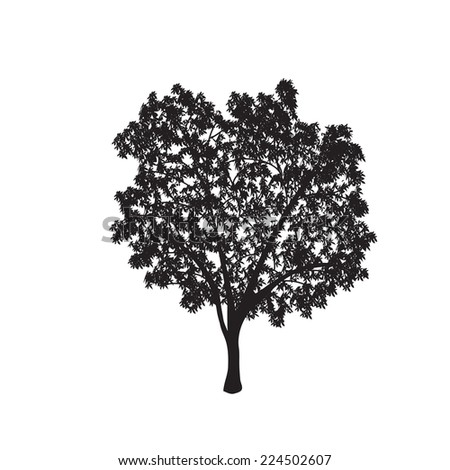 ficus tree silhouette with leaves on a white background - stock vector
