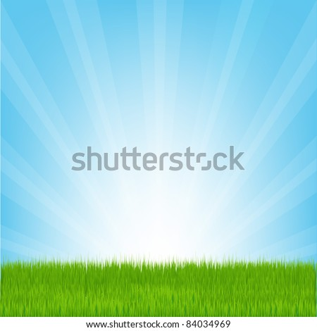 Field of Grass, Vector Illustration - stock vector
