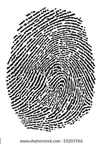 Fingerprint black on white. - stock vector