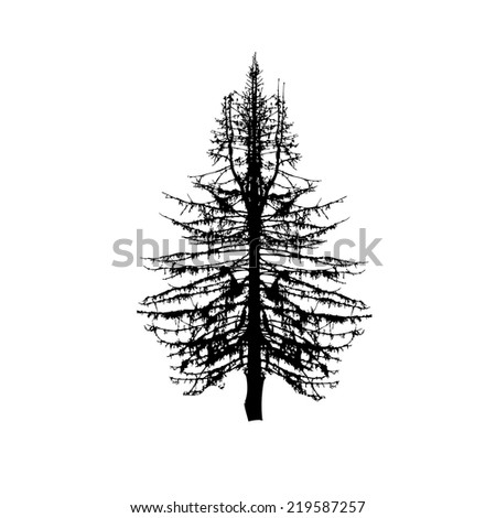 fir-tree silhouette on a white background. Vector - stock vector
