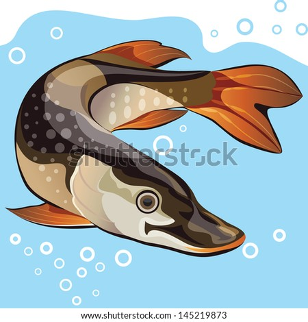 Fish, big pike, vector illustration - stock vector