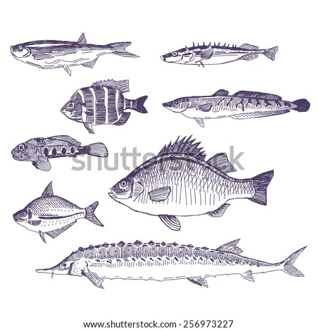 Fishes vector drawings set - stock vector
