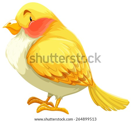 Flashcard of a yellow and white bird  - stock vector