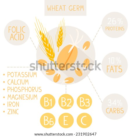 flat infographic useful properties of germinated wheat germ - stock vector