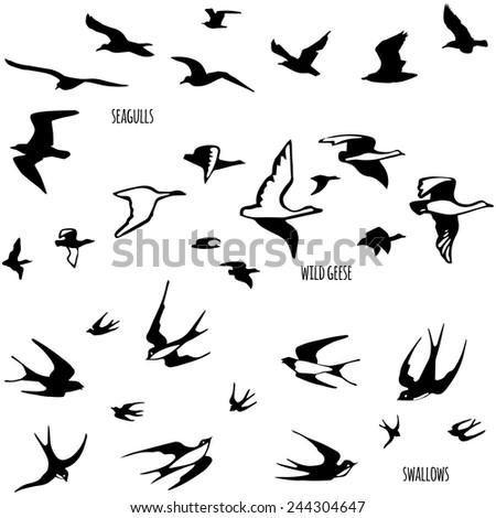 Wild Geese Drawing Flock of Birds Seagulls Wild
