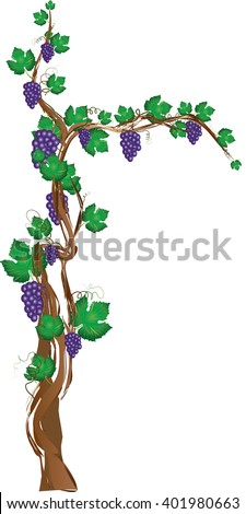 Floral frame with grapevine, grape clusters on a vine tree. Graphic element with copy space for text. - stock vector
