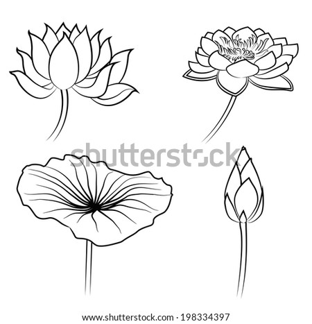 Floral Water Lily Elements for design - stock vector