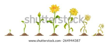 Flower - stock vector