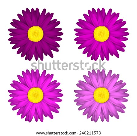 Flower collection of  daisies Isolated on white background. Spring. Pink edition. - stock vector