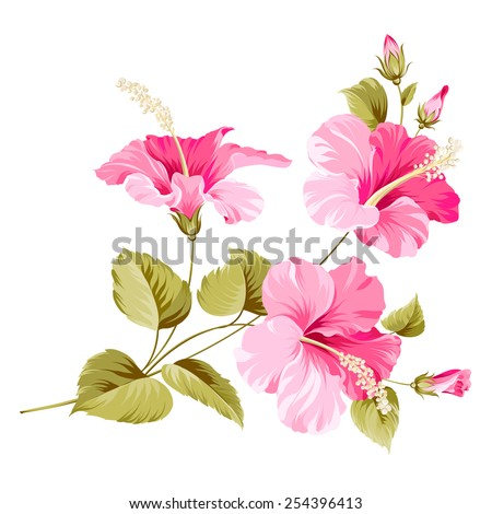 Flower hibiscus tropical plant. Vector illustration. - stock vector