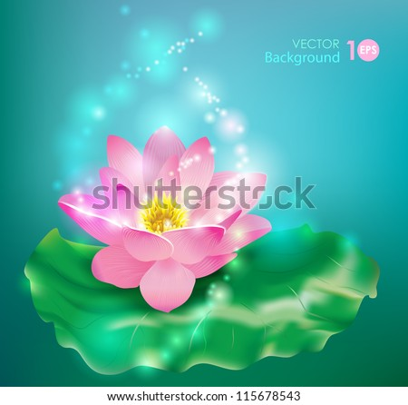 Flower lotus. Floral background. Vector eps 10. - stock vector