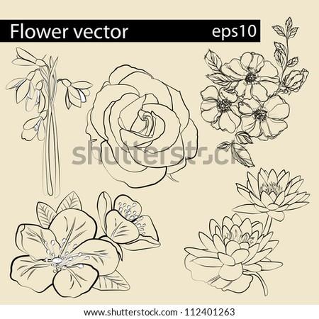Flower vector set | Editable Illustration - stock vector