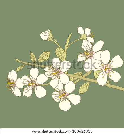 Flowers of the cherry blossoms on a green background - stock vector