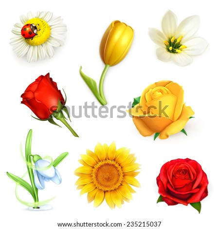 Flowers, set vector - stock vector