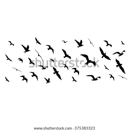 Flying birds silhouettes on white background. Vector illustration - stock vector