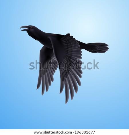 Flying black raven on blue sky background  - stock vector