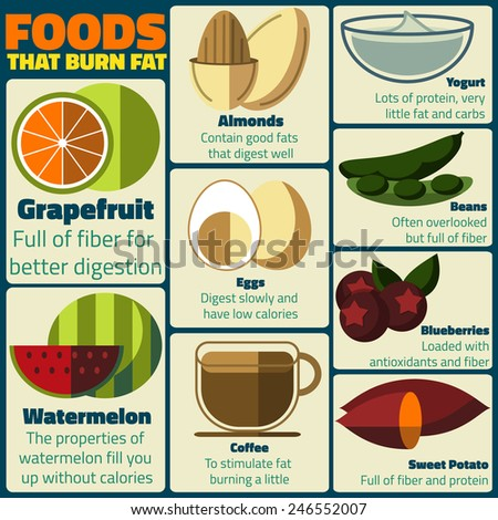 Foods that burn fat vector infographic - stock vector