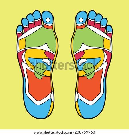 Foot reflexology illustration - stock vector