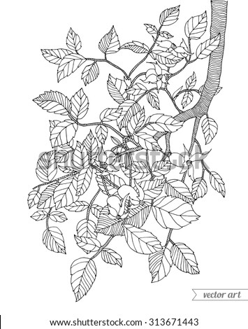 Forest tree branch with leaves. Vector. Hand drawn artwork. Zentangle Bohemia concept for invitations, cards, tickets, congratulations, branding, logo, label. Web and mobile interface template - stock vector