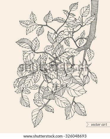 Forest tree branch with leaves, wild berries. Vector. Hand drawn artwork. Zentangle. Bohemia concept for invitations, cards, tickets, congratulations, branding, logo, label. Black and white, beige - stock vector